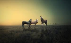 golden pastures. by cas887