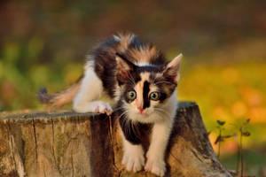 Curious cat by missfortune11
