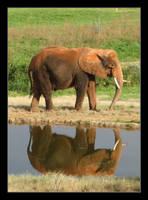 Elephant Reflection by vita-luna