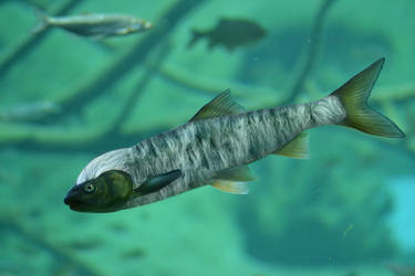 Fuzzy Fish by noblewebs