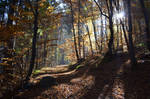 Autumn Forest by SandBG