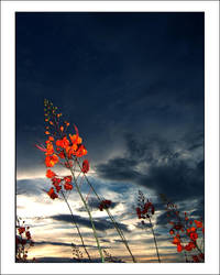 In the Wind by RandomAV1
