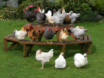Chicken Party by psngirl