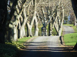 Mr Bate's Driveway by psngirl