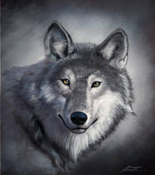 Wolf study v2 by makseph