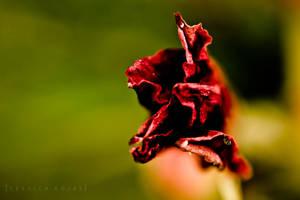 Dsc0524 by Lady-inred