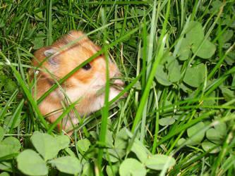 Green Grass Nibbeler by Ally-sun