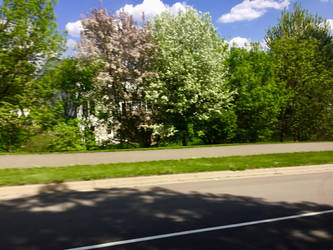 A beautiful suburban spring 1 by BILLYSBACONTM