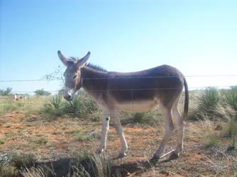 Donkey 1 by Embrick