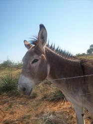 Donkey 2 by Embrick