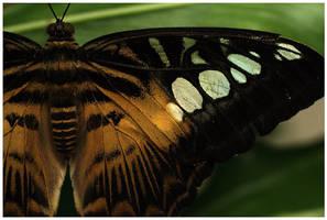 Butterfly I by rudeboyskunk