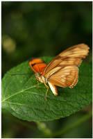 Butterfly IV by rudeboyskunk