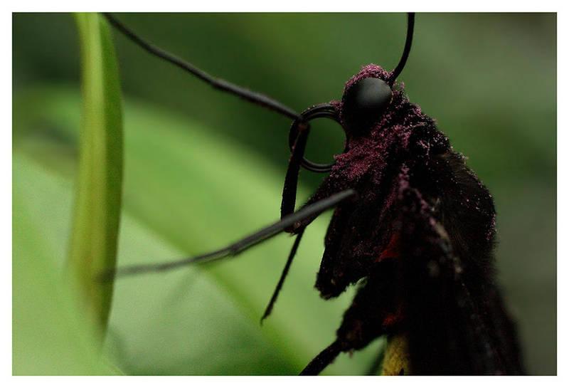 Butterfly VII by rudeboyskunk