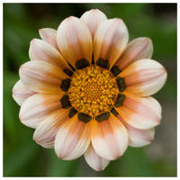 Flower by rudeboyskunk