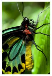 Butterfly X by rudeboyskunk