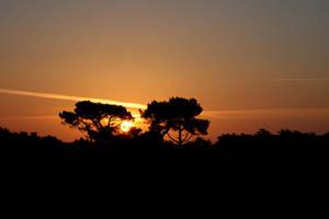 Rising Sun by BlAg001