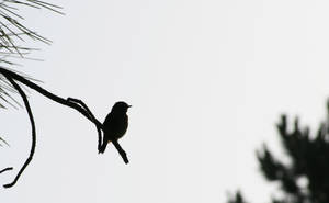 black bird by BlAg001