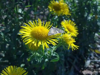 Gray Butterfly by DocherLesa