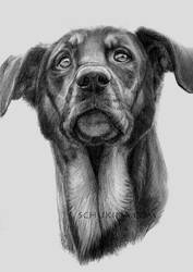 My Dog by sschukina