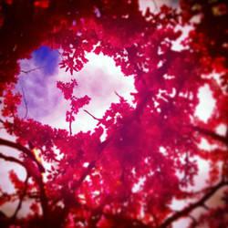Spring Love by xXkikyoXx