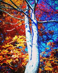Fall Fire by xXkikyoXx