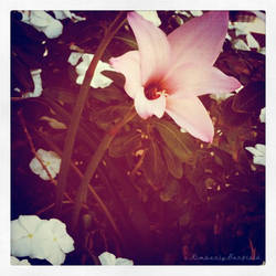 Beauty by Kimberly-Barfield