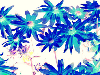 Blue flowers by hyyli