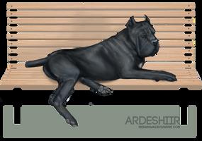 Ardesh on A Bench by reinafawn
