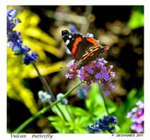 Vulcan butterfly by bracketting94