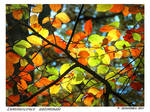autumnal luminescence by bracketting94