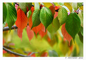 first autumnal colors by bracketting94