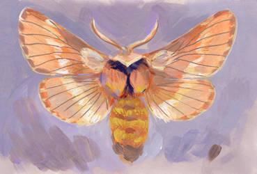 December Moth by jossujb