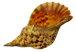 Shell cut out by SolStock