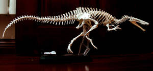 suchomimus skeleton by hannay1982