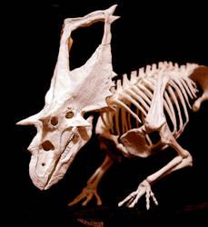chasmosaurus by hannay1982