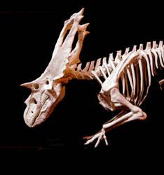 chasmosaurus1 by hannay1982