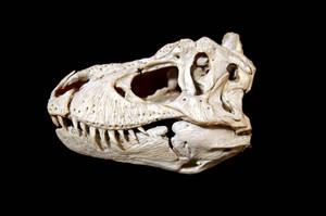 tyrannosaurus rex step 4 by hannay1982