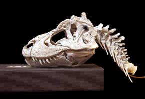 tyrannosaurus rex step 6 by hannay1982