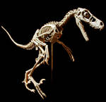 bambiraptor other side by hannay1982