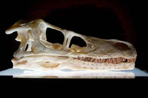 velociraptor skull by hannay1982