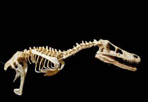 velociraptor step 12 by hannay1982