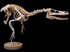 velociraptor step 14 by hannay1982
