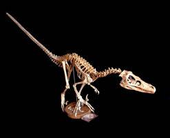 velociraptor by hannay1982