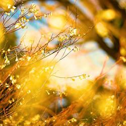 Spring (Part 2) by Einsilbig