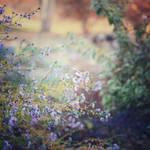Autumn Flowers by Einsilbig
