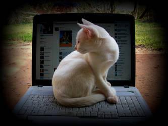 a cat on fb by gangahimalaya