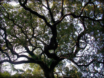 arbre , ombres et lumieres by gangahimalaya