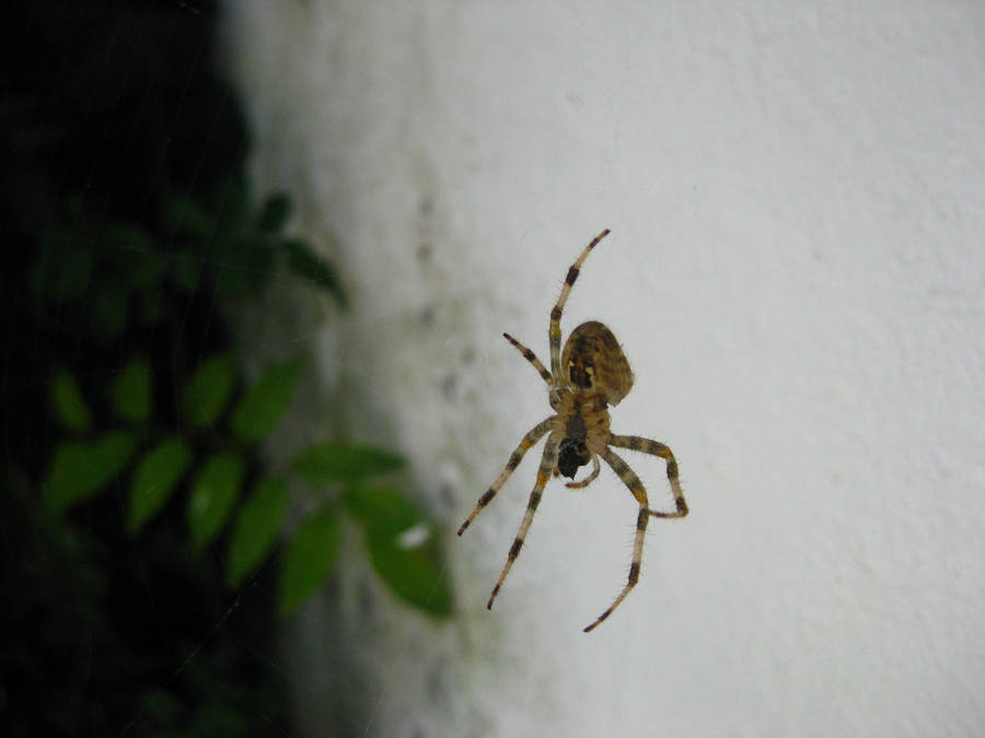 Spider that looks like OoT 2 by Andrecp