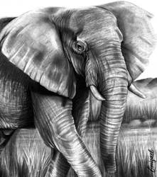 SAY 'NO' TO IVORY TRADE by emizael