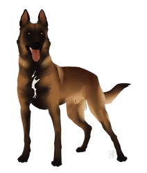 Malinois for SALE!!!AUCTION by Mr-SKID